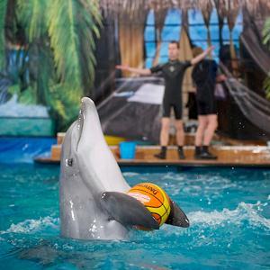 Дельфинарии, океанариумы Кадуя