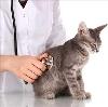 Ветеринарные клиники в Кадуе